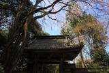 龍潭寺のシダレザクラ