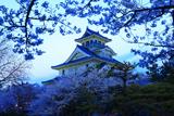 豊公園の桜 長浜城歴史博物館