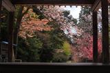 行過天満宮の桜