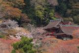 談山神社 桜と社殿