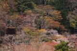 談山神社 桜と十三重塔