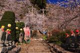 上田市 宝蔵寺の桜
