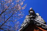 信綱寺の墓前之桜