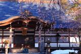 神宮寺のしだれ桜