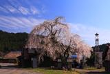 飯山市 小菅の里の枝垂桜