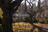 天宗寺のしだれ桜