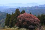 黒川庚申堂の桜