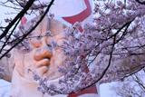 万博記念公園の桜 太陽の顔
