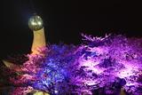 万博記念公園の桜 芸術は爆発だ