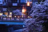有馬温泉の桜 太閤橋