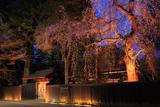 角館 夜桜ライトアップ
