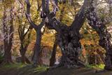 大星神社のしだれ桜