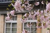 盛岡 米内浄水場の桜