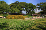 江の島 クローバーの花