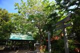 江の島 新緑の児玉神社
