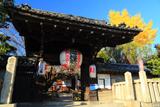 安祥院 山門と銀杏黄葉