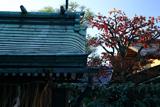 恵美須神社 末社と紅葉