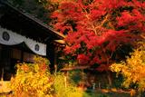 霊山正法寺 本堂と紅葉
