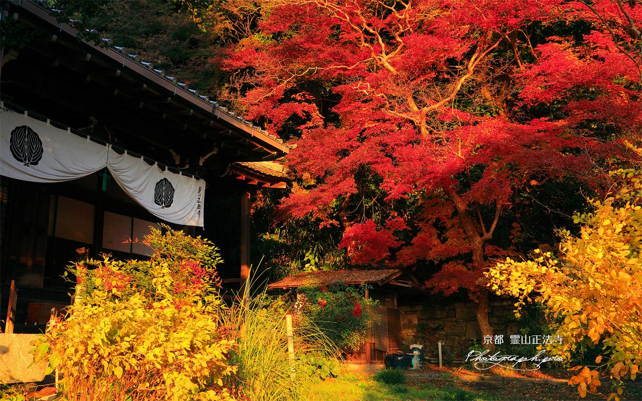 霊山正法寺 本堂と紅葉 壁紙