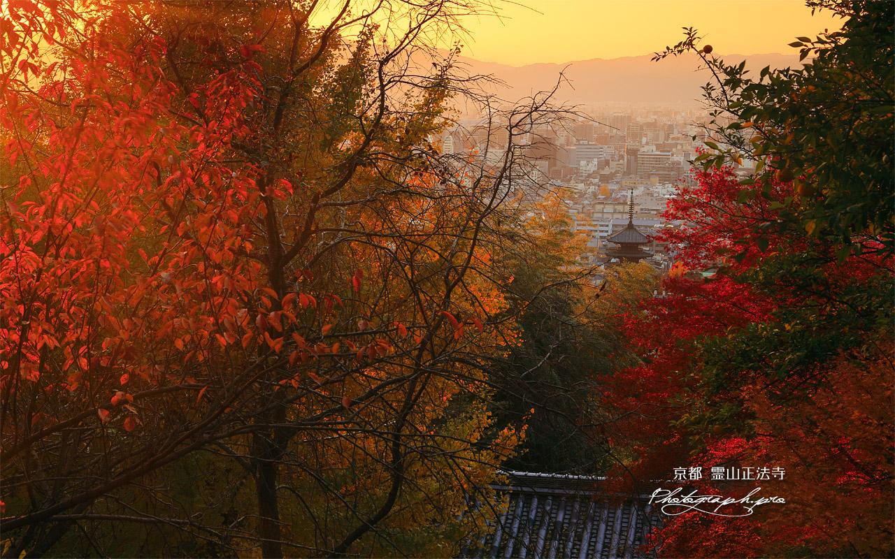 霊山正法寺 紅葉越しの山門と京都市街 壁紙