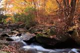 るり渓 雑木紅葉