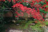 天球院 方丈西庭の散紅葉