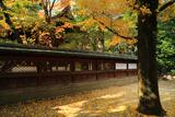 白峯神宮 イチョウ黄葉と本殿