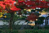 両足院 建仁寺境内の紅葉