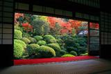 安楽寺 書院から紅葉の庭園