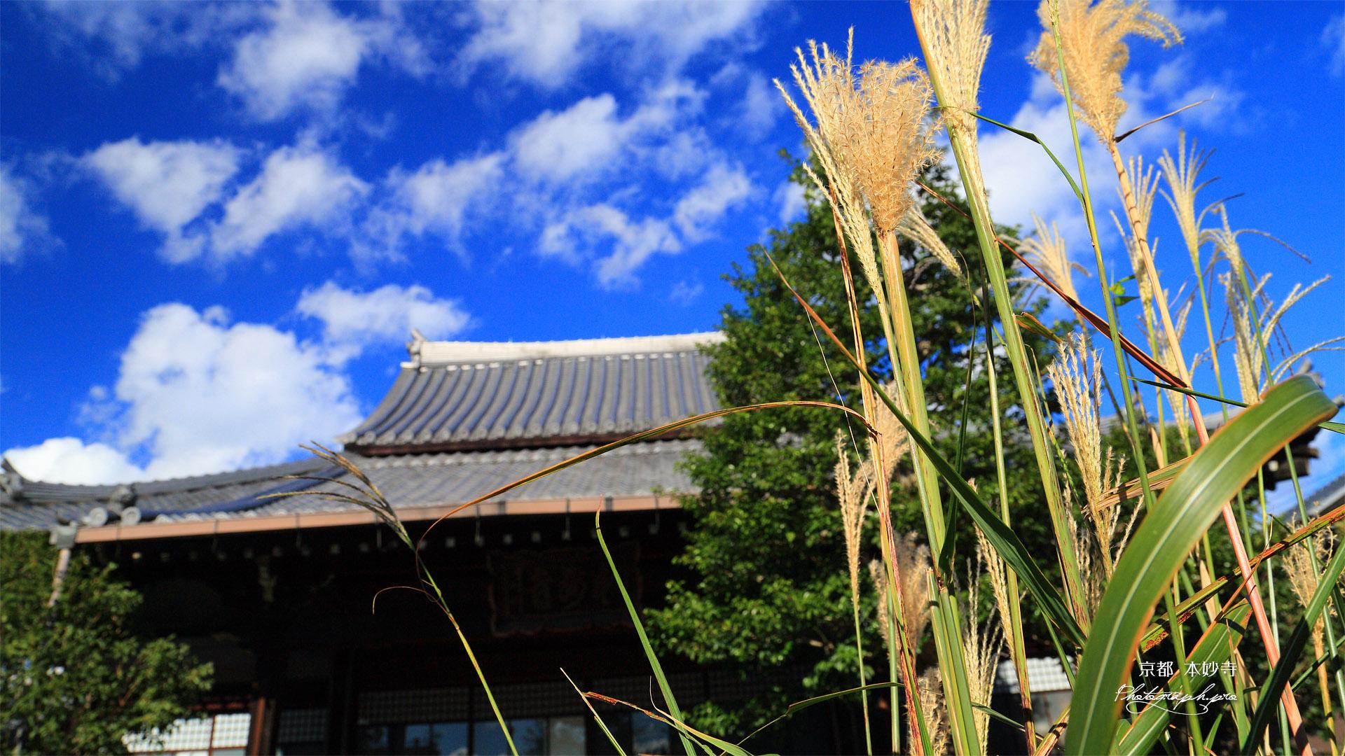本妙寺 ススキと本堂