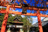 満足稲荷神社 桜紅葉と鳥居