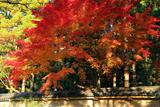 雙林寺 築地塀と紅葉
