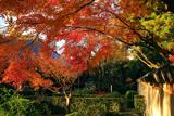 雙林寺 紅葉越しの本堂