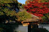 月真院 本堂と紅葉