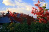 春光院 紅葉と堂宇
