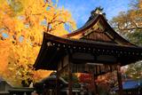 東三条大将軍神社 拝殿と大銀杏黄葉