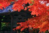正林寺 紅葉と鐘楼