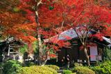 清閑寺 本堂と鐘楼に紅葉