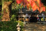 羽束師神社 桜紅葉と拝殿