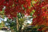 淀城跡公園 紅葉と與杼神社