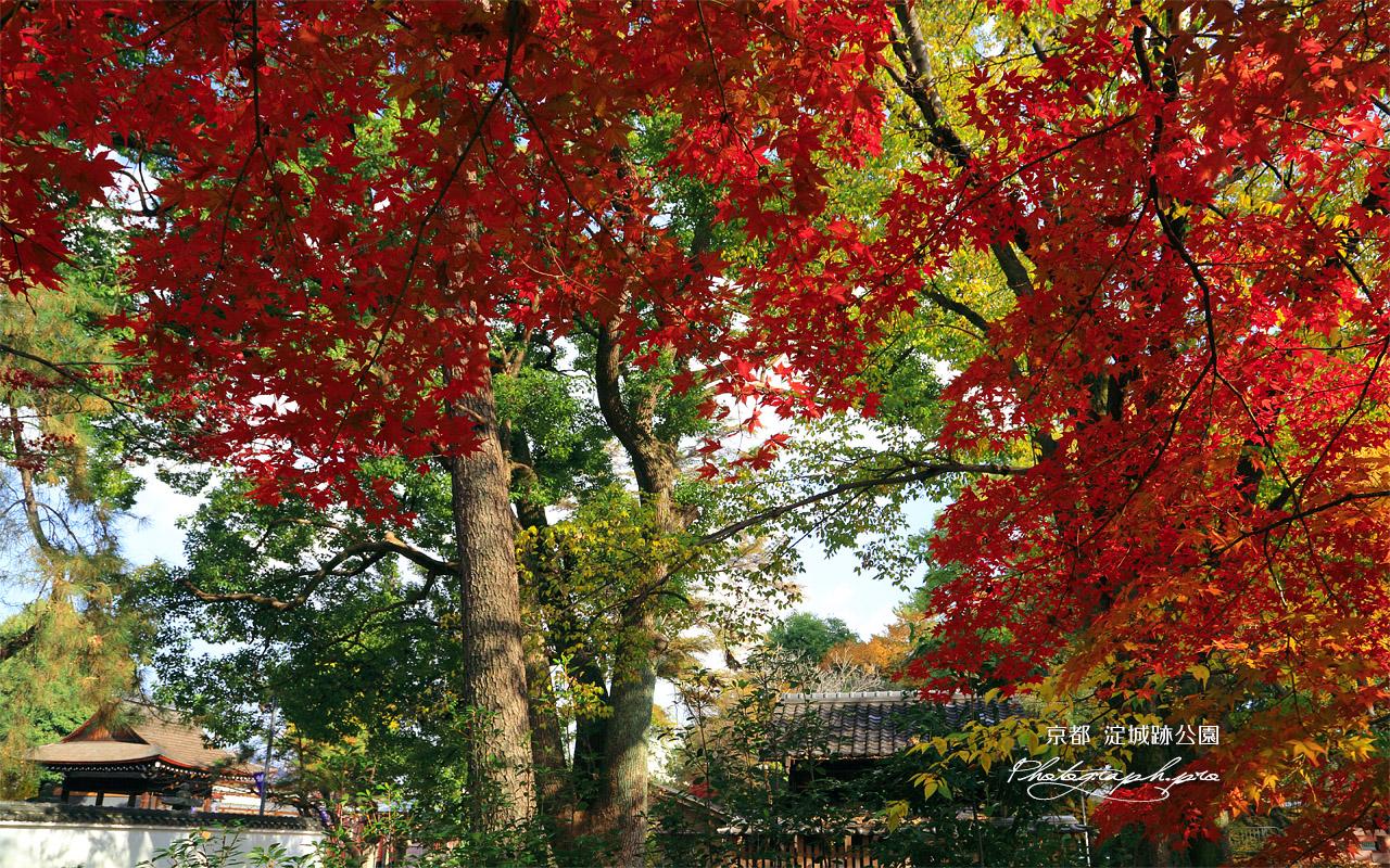淀城跡公園 紅葉と與杼神社 壁紙