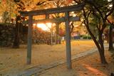 淀城跡公園 稲葉神社鳥居と銀杏黄葉