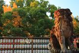 與杼神社 狛犬と公孫樹黄葉