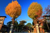與杼神社 イチョウ黄葉と拝殿