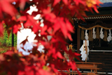 飛行神社 紅葉越しの本殿