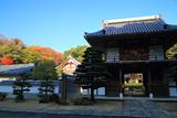 圓福寺 山門と雑木紅葉