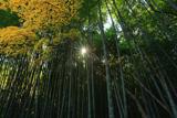 圓福寺 紅葉と竹林