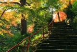 神應寺 参道の三色紅葉