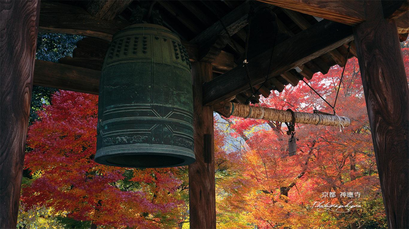 神應寺 鐘楼越しの紅葉 壁紙