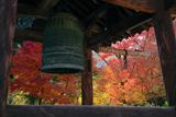 神應寺 鐘楼越しの紅葉
